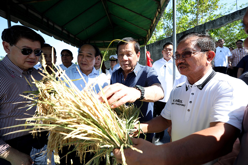 President Rodrigo Roa Duterte checks the quality of the hybrid rice harvested during the Grand Harvest Festival of SL Agritech Corporation at the Nagkakaisang Magsasaka Agricultural Primary Multipurpose Cooperative (NMAPMPC) Compound in Talavera, Nueva Ecija on April 5, 2017. Also in the photo are SL Agritech Corporation CEO Henry Lim Bon Liong and Agriculture Secretary Emmanuel Piñol. ROBINSON NIÑAL JR./Presidential Photo